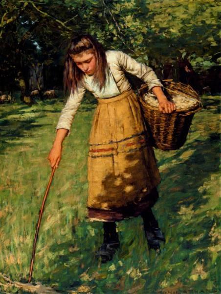 Gathering Wool